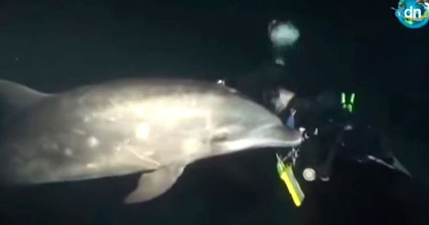 Dolphin Caught In Net Seeks Out Help From A Diver